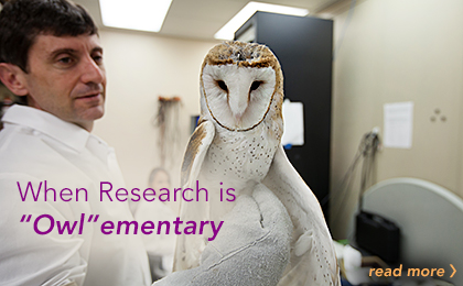 Barn Owls in the Bronx: Offering Clues to Brain Function