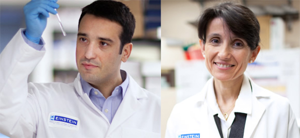 Albert Einstein College of Medicine Receives Grant From The Michael J. Fox Foundation to Fund Drug Discovery Project Targeting Parkinson's