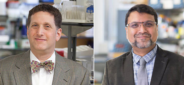 Researchers at Albert Einstein College of Medicine Receive $2.6 Million NIH Grant to Develop Targeted Cancer Immunotherapies